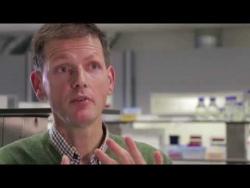 Embedded thumbnail for Dierenproeven in kankeronderzoek