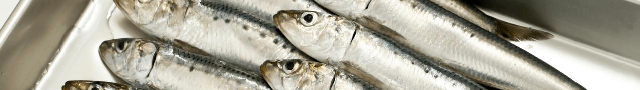 Vis(olie) helpt ongewenst gewichtsverlies door kanker tegen te gaan