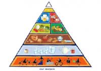 Actieve voedingsdriehoek