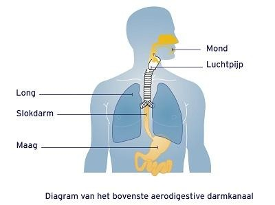 Aero-digestieve darmkanaal