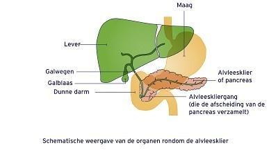 De pancreas