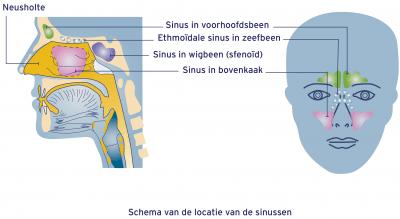 Schema van de sinus