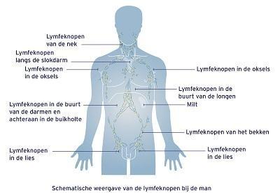 Lymfeknoppen bij de man
