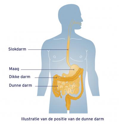 tegen diarree