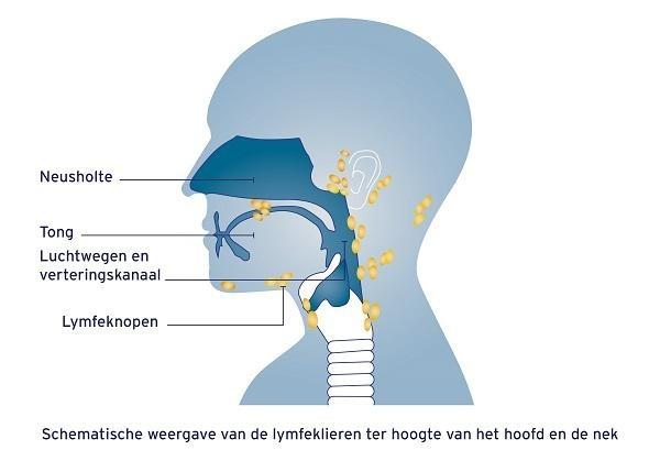 Lymfeklieren hoofd en nek