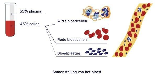 Samenstelling van het bloed