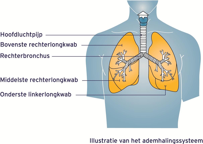 Ademhalingssysteem